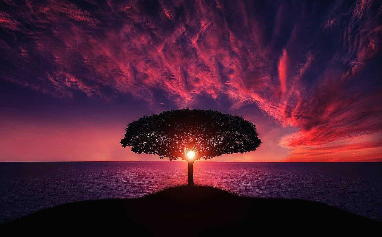 Baum des Yoga